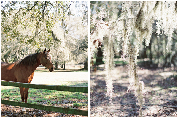 Middleton Barns horses Stefanie Kapra Photo Wedding Photographer Charleston SC