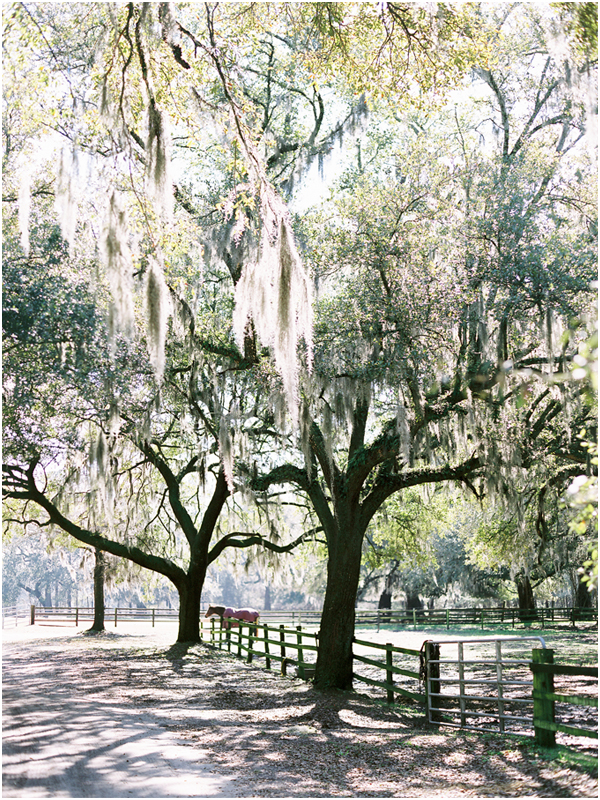 Middleton Plantation live oaks spanish moss Stefanie Kapra Film Photo Wedding Photographer Charleston SC