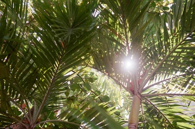 Gorgeous Palmtrees Florida Sun